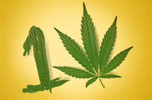 the myths and truths about marijuana When it comes to myths about marijuana, there are plenty by now, we've  debunked the most obvious ones no, weed can't kill you, it's not.